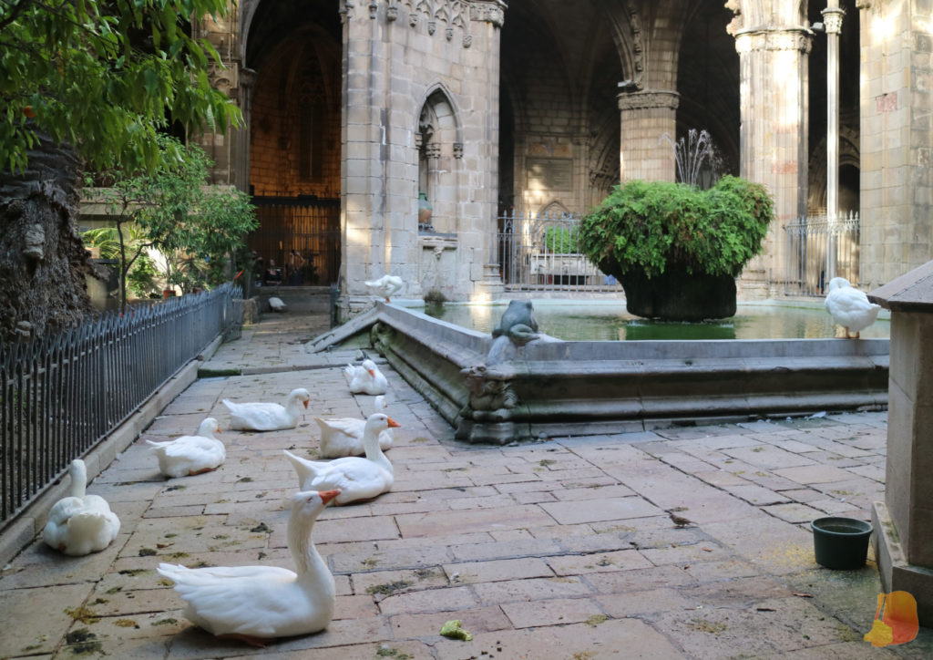 Ocas en el claustro de la Catedral