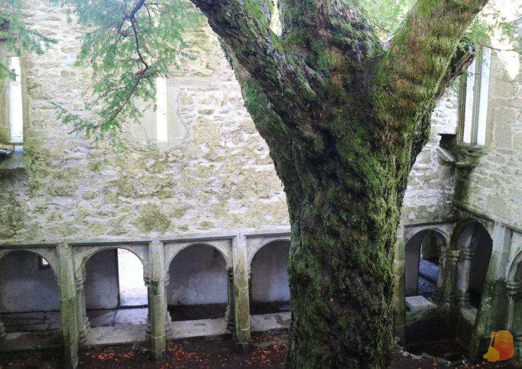 Claustro de la Abadía de Muckross