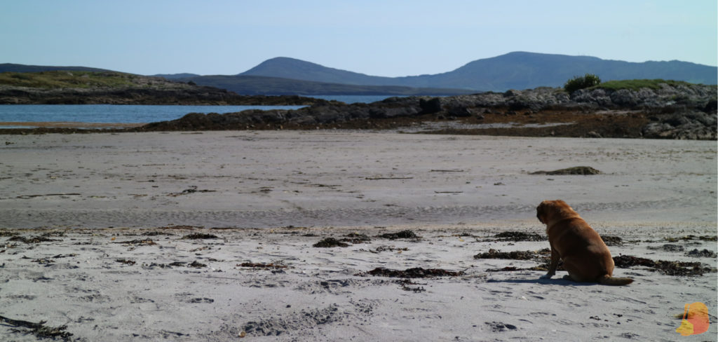 Playa de Castlecove