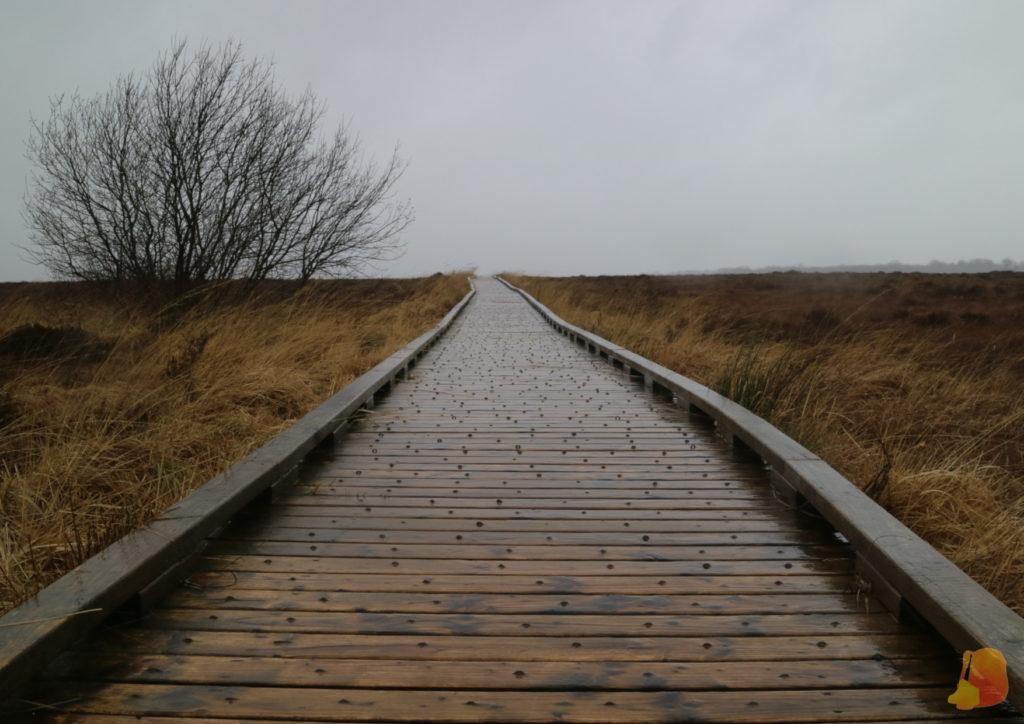 Pasarela de madera adentrandose en el paisaje de turbera