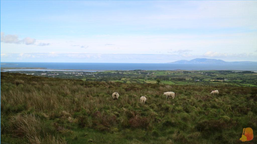 Vistas al océano. Se ven los campos y las ovejas pastando en primer plano.